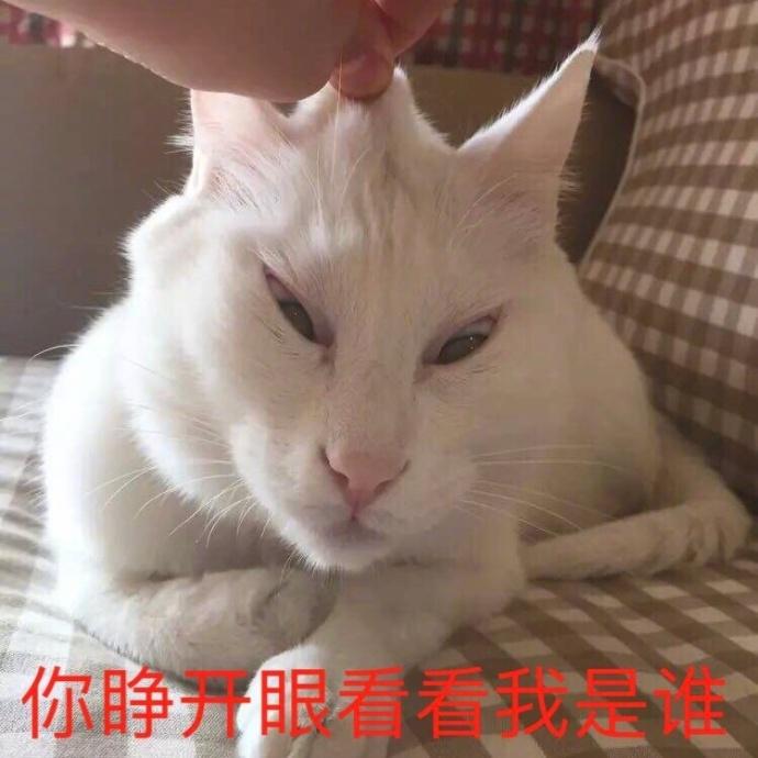 表情 小猫咪,你啥表情,我不欠你东西吧 天天快报 表情