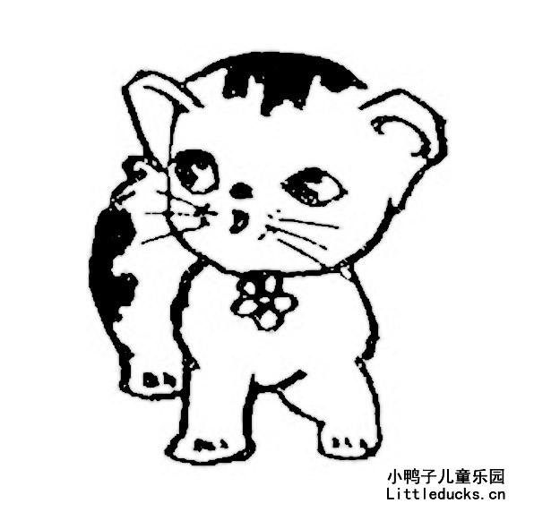 表情 可爱的小猫的简笔画图片大全 动物简笔画猫,猫简笔画图片动物简笔画 小  表情