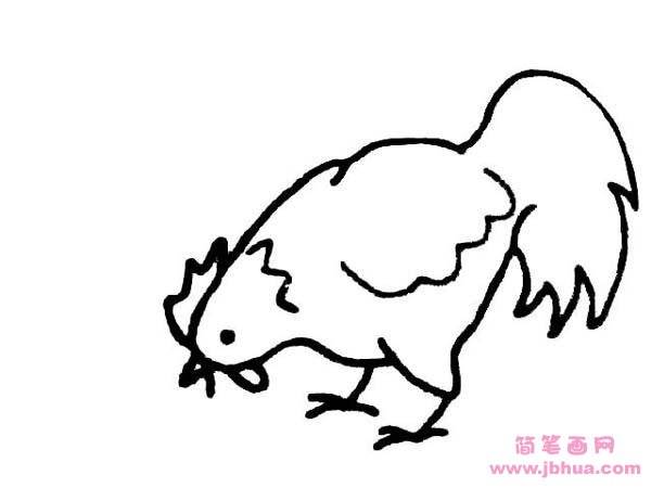 表情 啄米的母鸡简笔画 简笔画网 表情
