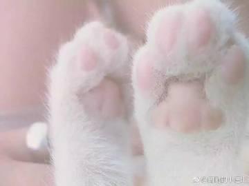 表情 猫爪牵手 猫爪 猫爪牵手表情包 猫爪简笔画 友言网 表情