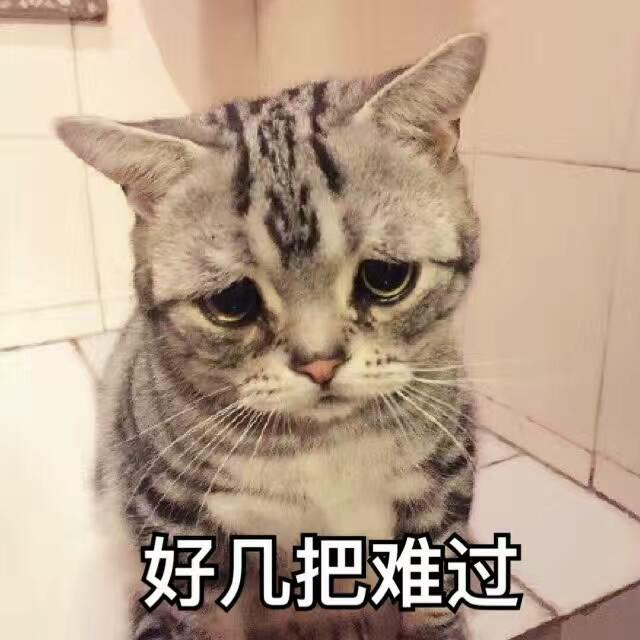 表情包 动图 萌萌哒 猫表情 发表情 fabiaoqing.com 表情