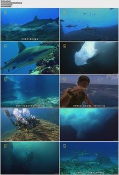 国家地理:神秘鲨鱼穴