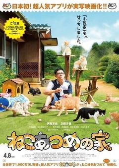 猫咪后院之家