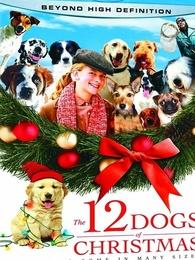 圣诞节的12只小狗