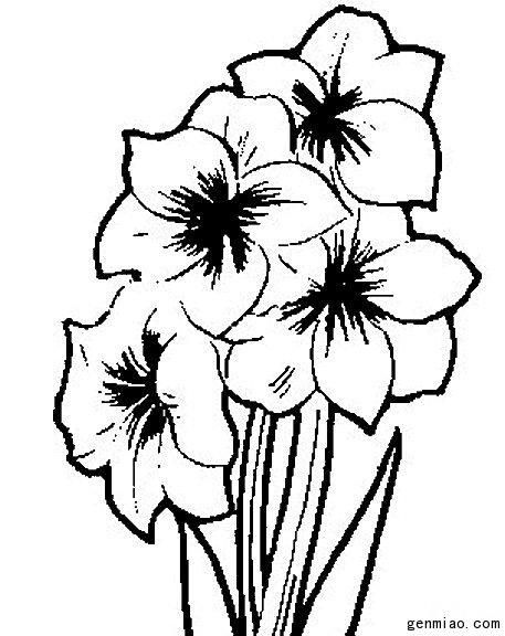 漂亮的迎春花简笔画图片