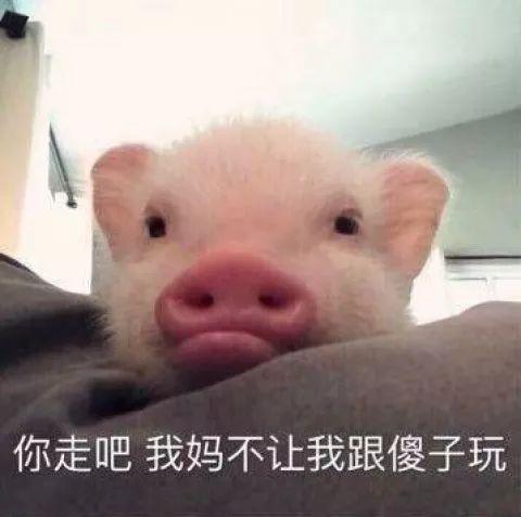 猪猪带字图片大全可爱
