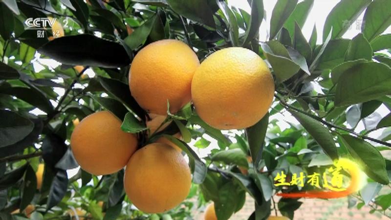 《生财有道》 20210303 乡村振兴中国行——橙香业旺 美在安远