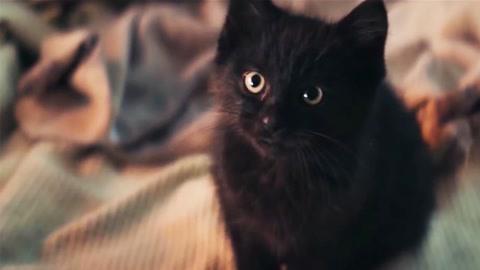黑猫身家3000万!