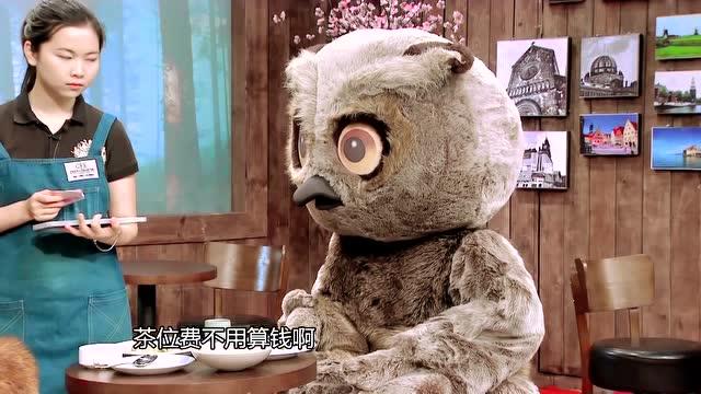 第16期:丛林公寓:大眼枭耍套路 猴嗨森连连叫苦