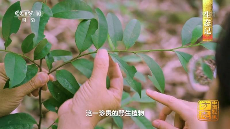 《中国影像方志》 第809集 广西上思篇