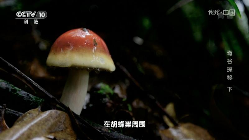 《地理·中国》 20210113 奇谷探秘 下