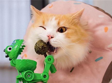 销量最高逗猫玩具