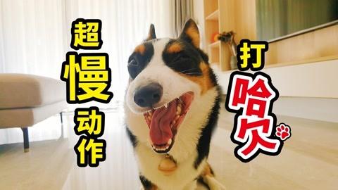 超慢镜头下狗狗的动作