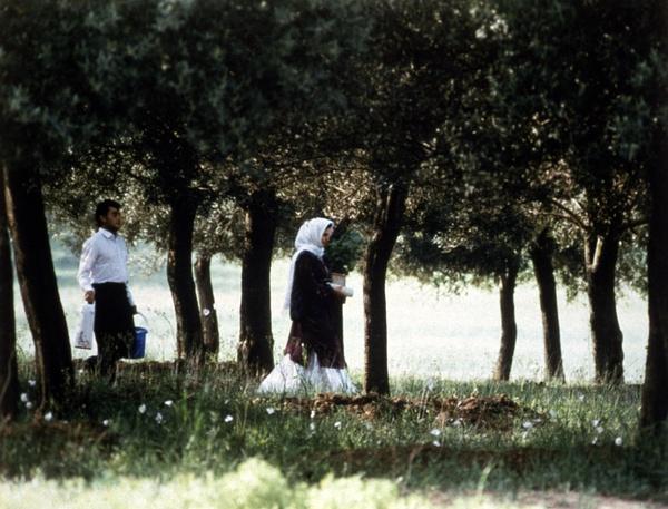 《橄榄树下的情人》全集-高清电影完整版-在线观看