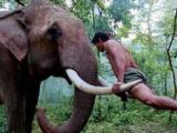 43期:自然和谐万象之国 托尼·贾为夺爱象打泰拳