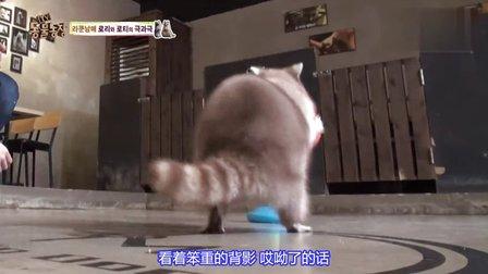 周日韓綜 TV動物農場線上看
