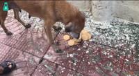 流浪狗拦人求助,还以为是要食物,没想到竟是要救它的孩子!