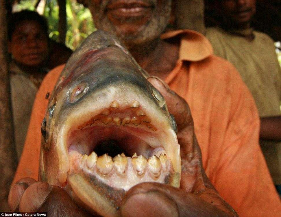 这种鱼,没有一个男人不怕,为什么女人看到却一点都不慌?