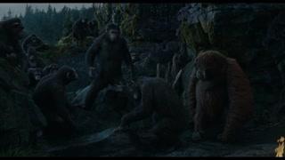 科巴 只学会了憎恨的猩猩