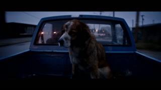 这个男的太坏了 竟然开这么远的车来扔狗