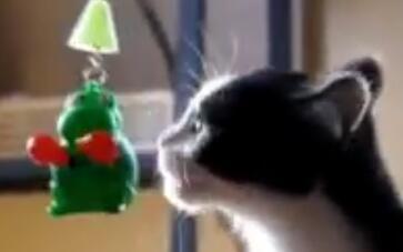 《为什么猫都叫不来》猫咪特辑