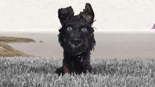 犬之岛:流浪狗讲述流浪生活 曾被领养却无法亲人
