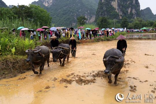廣西大新舉辦農耕民俗文化節