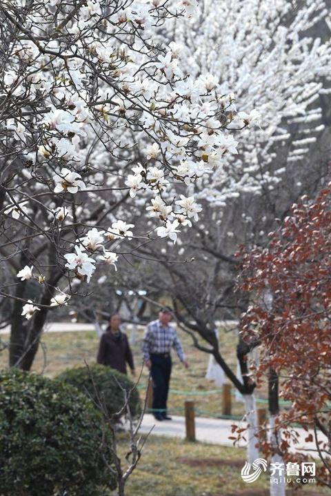 踏春正當時 花紅柳綠展現濟南最美春光