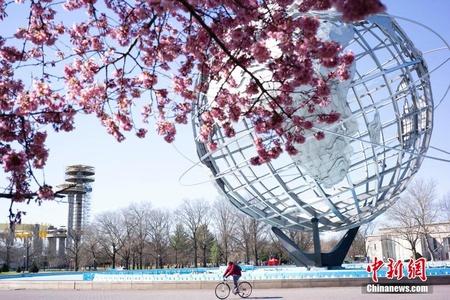 美国纽约科罗娜公园樱花盛开