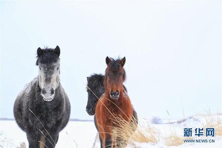 雪落山丹马场 冬季雪原美景一览