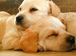 狗狗怎样才能专心的接受训练