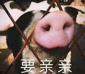 明明是狗年,为什么最火的是蠢萌的猪猪表情包? 轻松一刻 第26张