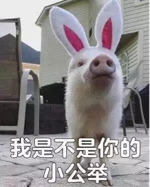 明明是狗年,为什么最火的是蠢萌的猪猪表情包? 轻松一刻 第27张