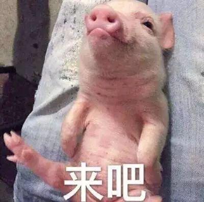明明是狗年,为什么最火的是蠢萌的猪猪表情包? 轻松一刻 第31张