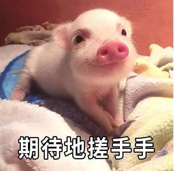 明明是狗年,为什么最火的是蠢萌的猪猪表情包? 轻松一刻 第37张