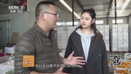 [农广天地]一甜遮百丑 高山茶飘香 20190729