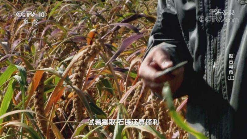 《探索·发现》 20200924 探古寻食(上)