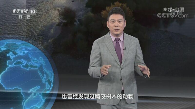 《地理·中国》 20200928 秘境栖息地·乌伦古河的秘密 上