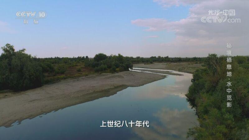 《地理·中国》 20200927 秘境栖息地·水中觅影