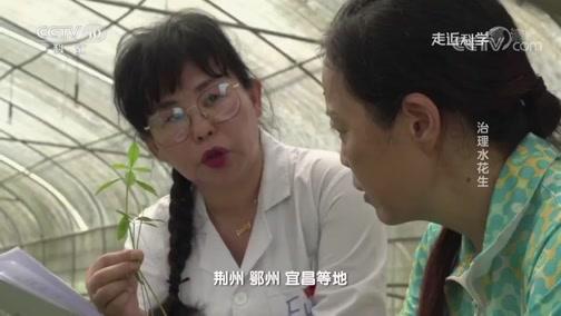 《走近科学》 20190930 治理水花生