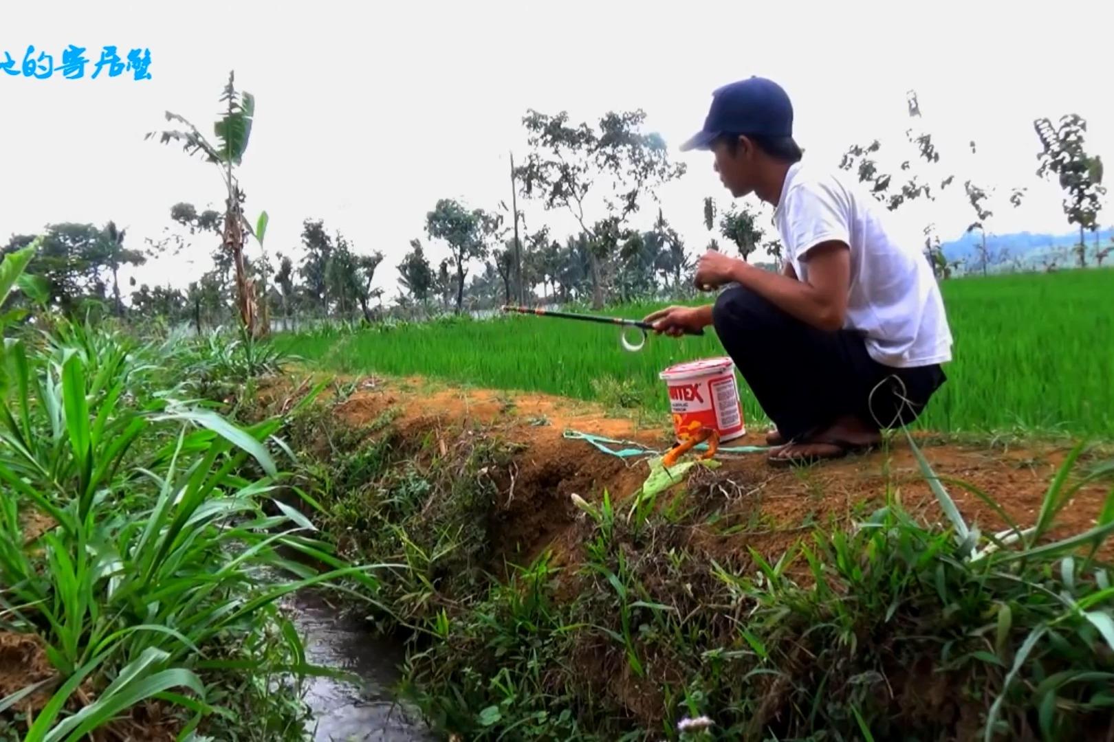 稻田旁小河沟野钓,用最小的钩最短的竿,比钓大鱼都有趣!