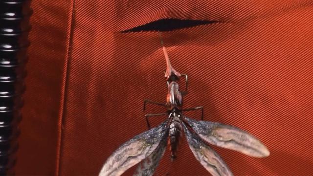 外星生物在地球迅速繁衍,男子去侦察,竟被外星蚊子钻进皮肤里