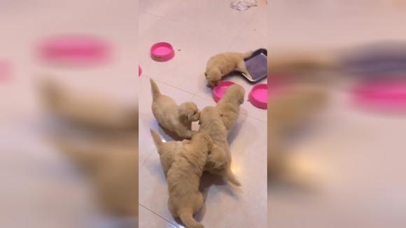 一群可爱的小狗狗 小家伙美美哒