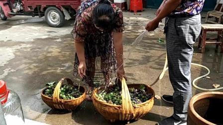 陈大哥家种的葡萄想做葡萄酒喝, 需要在家做啥准备, 看看他在干啥