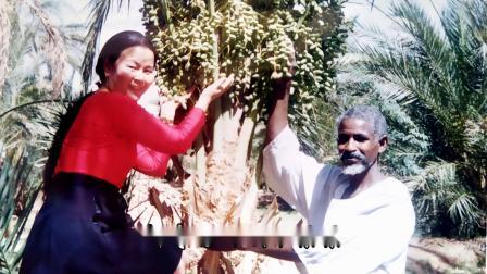 尼罗河畔的歌声(2001在苏丹喀土穆)