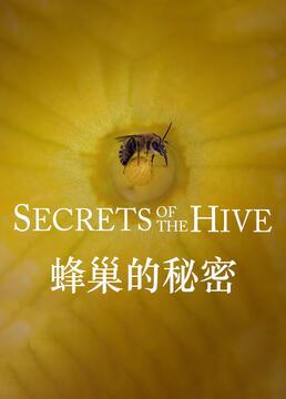 蜂巢的秘密剧照