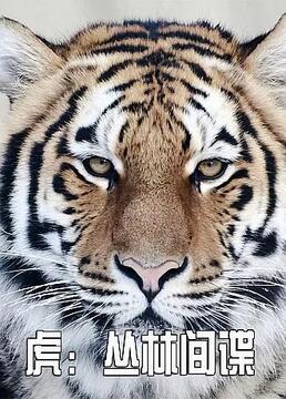 虎丛林间谍剧照