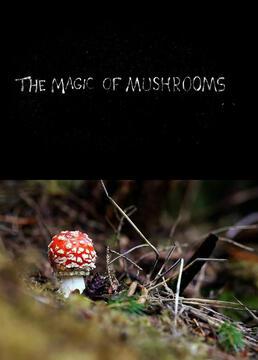 蘑菇的魔力剧照