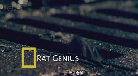 天才老鼠剧照