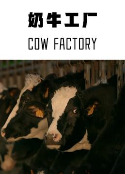 奶牛工厂剧照